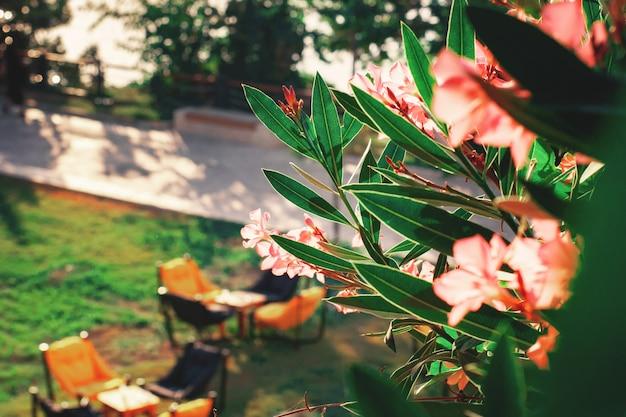Arbre en fleurs au premier plan