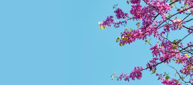 Arbre en fleurs de fond de printemps au printemps dans le contexte d'un ciel de printemps ensoleillé photo de haute qualité