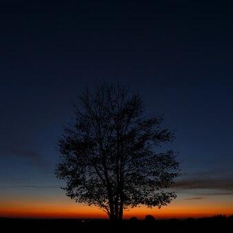 Arbre sur fond de ciel au coucher du soleil