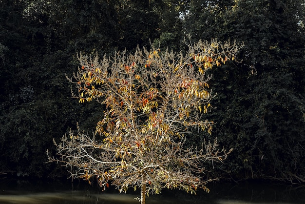 L'arbre avec fond de toile de fond