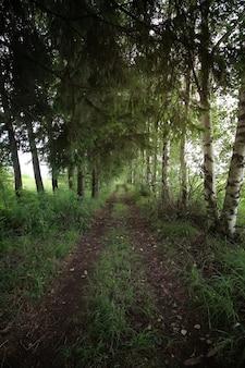 Arbre forestier au sol de la route