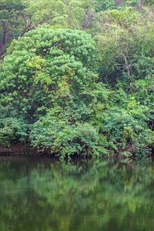 Arbre en forêt reflétant l'eau avant le coucher du soleil pour papier peint