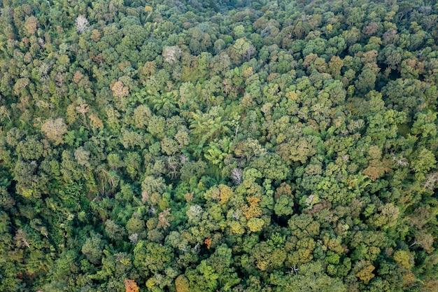 Arbre de forêt vue de dessus aérienne et texture de l'arrière-plan de la vue de la forêt d'arbres verts abstrait fron caméra de drone