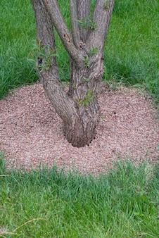 Arbre fruitier et cercle proche du tronc d'argile protection de l'arbre contre les mauvaises herbes et le gel