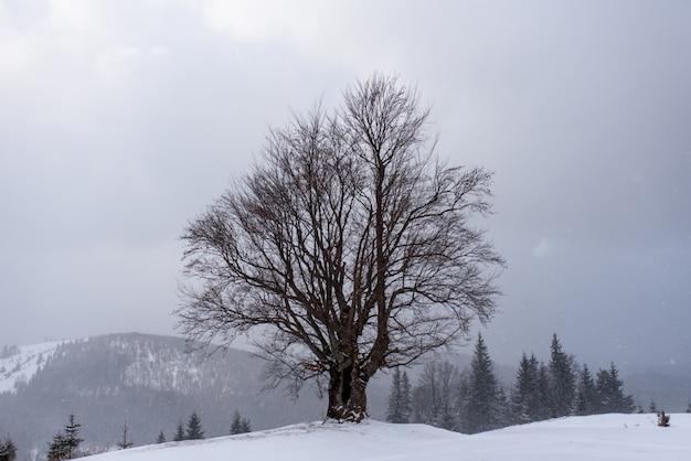 Arbre gelé sur une montagne en hiver