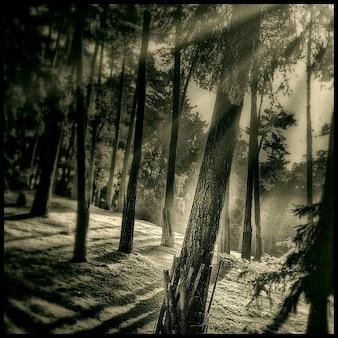 Arbre humeur mystique forêt lumière du soleil en arrière vous connecter