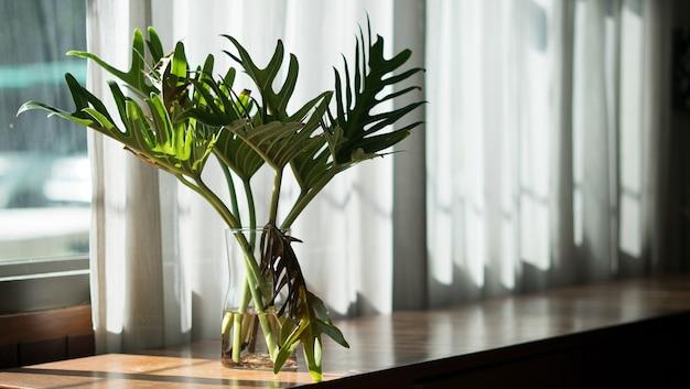L'arbre à l'intérieur de la maison repose sur la table en bois par une journée ensoleillée.