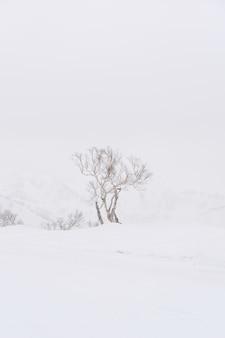 L'arbre isolé sur la neige duveteuse au sommet du pic d'asari à hokkaido