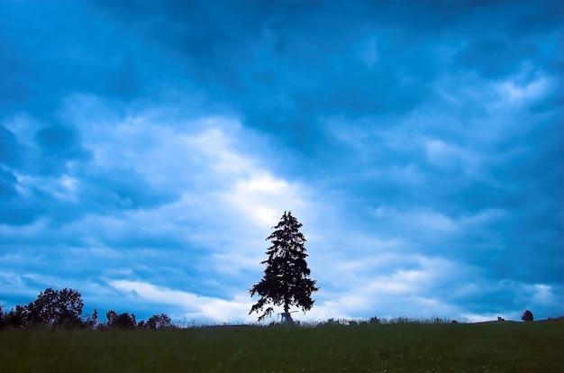 Arbre jour nuageux