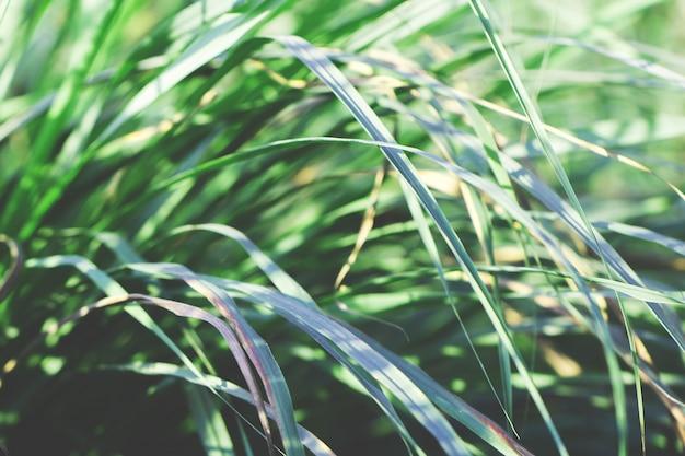 Arbre laisse pour la nature fond et enregistrer le concept vert