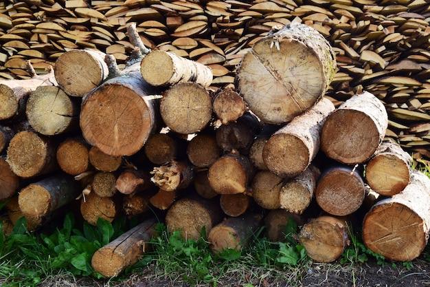 L'arbre malade est scié en rondins et plié sur l'herbe verte. abattre de vieux arbres pour plus de sécurité. préparation du bois de chauffage