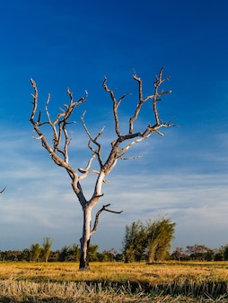 Arbre mort, fond d'arbre de silhouette