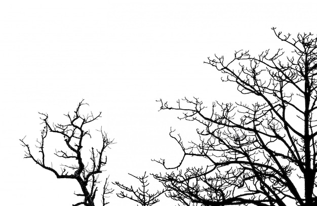 Arbre mort silhouette et branches isolés sur fond blanc