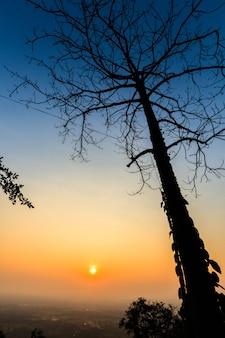 Arbre mort silhouette sur ciel coucher de soleil