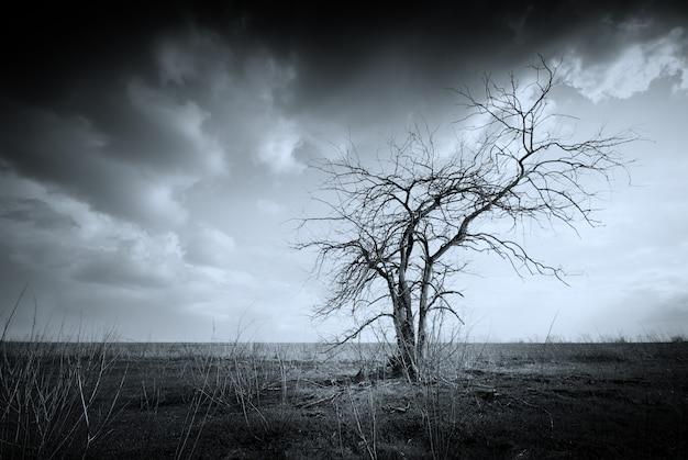 Arbre mort solitaire