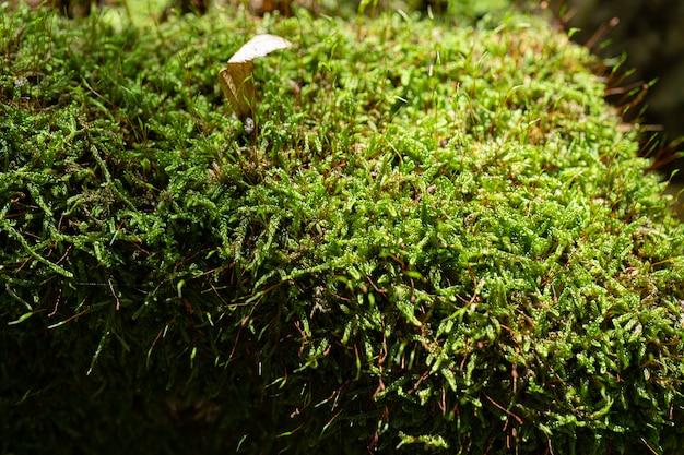 Arbre avec de la mousse sur les racines dans une forêt verte ou de la mousse sur un tronc d'arbre. écorce d'arbre avec de la mousse verte