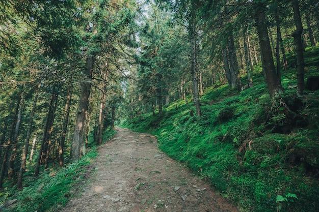 Arbre naturel. sentier dans la forêt avec des arrière-plans ensoleillés.