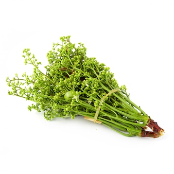 Arbre de neem siamois, nim, margosa isolé sur fond blanc.