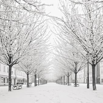 Arbre de neige sur l'île de kampa, prague