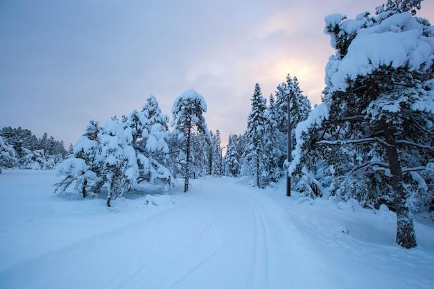 Arbre de neige magnifique paysage d'hiver