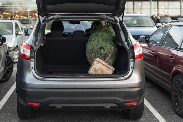Arbre de noël emballé dans un coffre de la voiture