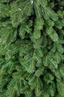 Arbre de noël en gros plan sans jouets. bon esprit du nouvel an. branches d'un arbre de noël vert se bouchent
