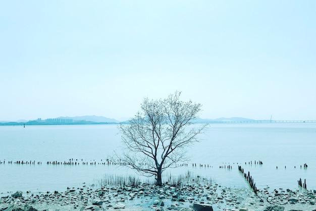 Arbre nu solitaire en hiver avec des montagnes sur le