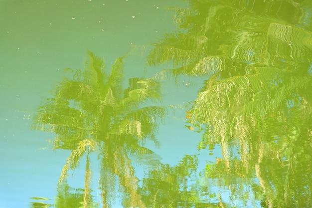 Arbre d'ombre dans l'eau