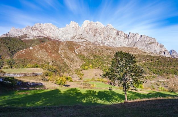 Arbre d'ombres et montagnes. picos de europa. espagne