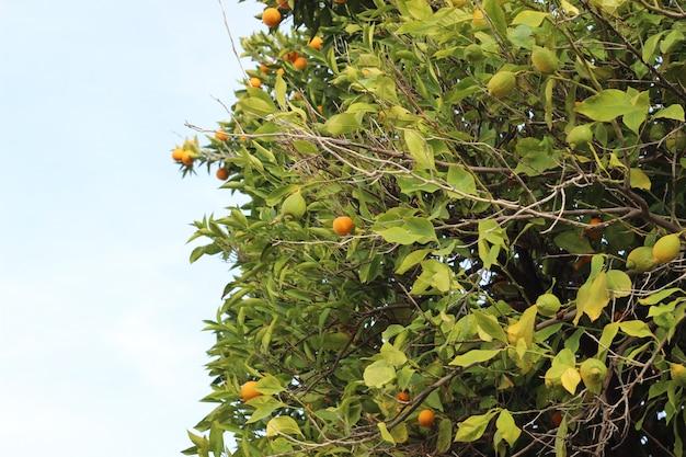 Arbre orange extérieur en gros plan