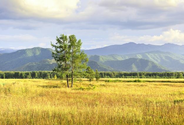 Un arbre parmi les montagnes de l'altaï sous un ciel bleu nuageux sibérie russie