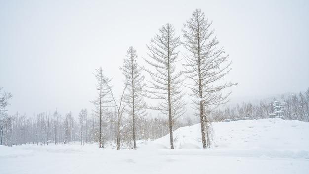Arbre avec paysage d'hiver