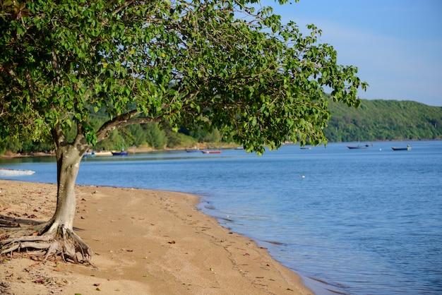 Arbre sur la plage près de la montagne