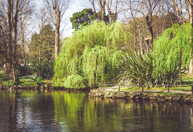 Arbre pleureur qui pende vers l'étang d'un parc. reflets dans l'eau.