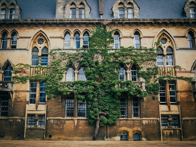 Arbre poussant dans le mur du bâtiment du christ church college à oxford.