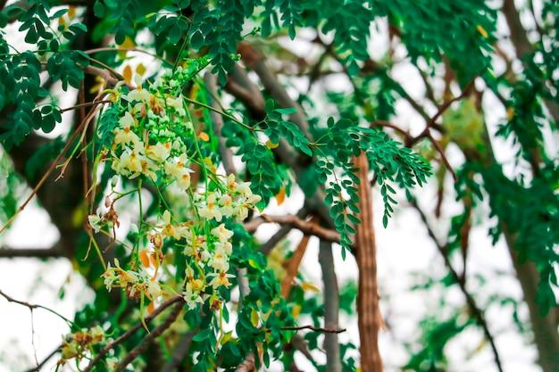 Arbre de radis ou pilon a une fleur orange blanche et jaune