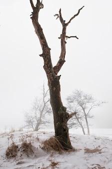 Arbre sur la rive d'un lac enneigé en hiver dans le brouillard dans le style du minimalisme