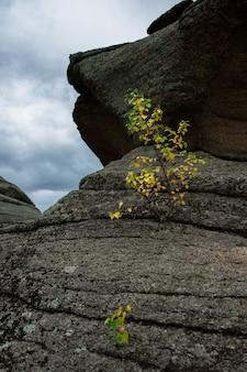 Arbre sur les rochers