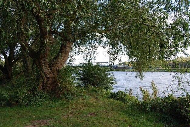 Arbre ruhr paître uferweg arbres nature rivière