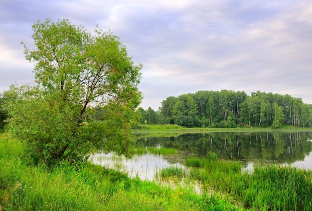 L'arbre s'est penché sur l'eau du lac sous le ciel bleu nuageux du matin