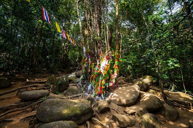 Arbre sacré en route vers la pierre avec l'empreinte du seigneur bouddha