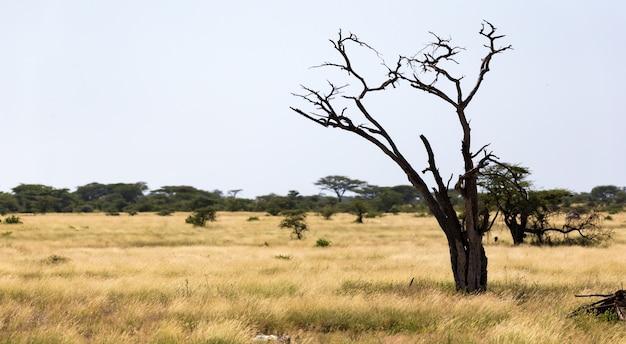 Un arbre sans feuilles au milieu de plantes vertes