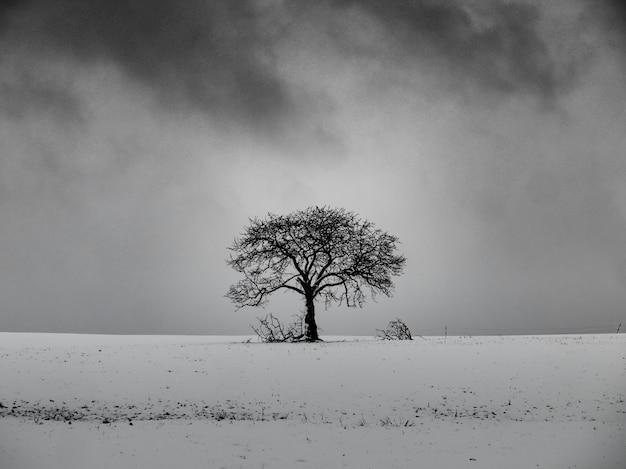 Arbre sans feuilles sur une colline enneigée avec un ciel nuageux en arrière-plan en noir et blanc
