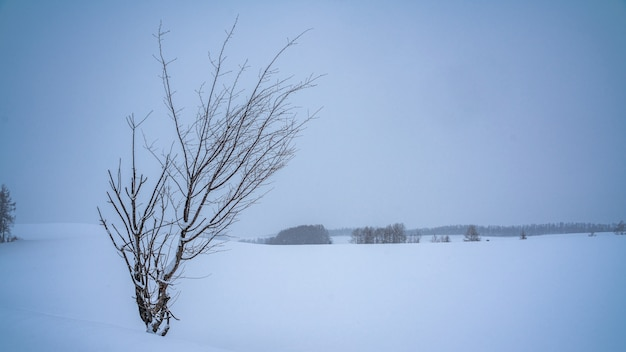 Arbre sans feuilles en hiver