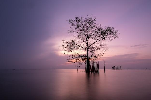 L'arbre se tient dans le lac le matin