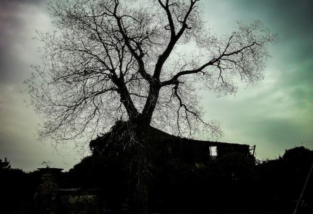 Un arbre séculaire en hiver, plongé dans un lieu abandonné plein de ruines et vestiges d'un bombardement d'après guerre : cliché noir et blanc avec ciel très sombre.