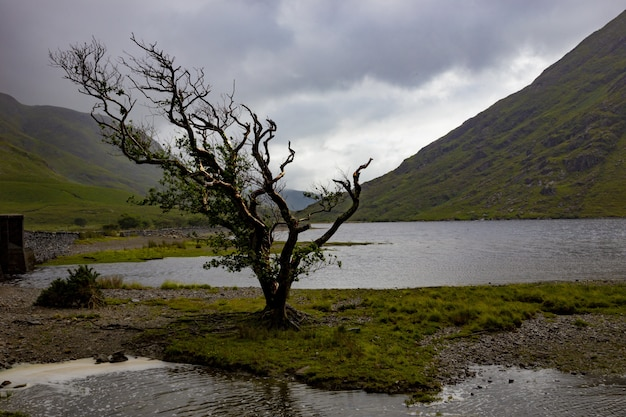 Arbre seul balayé par le vent à doo lough, comté de mayo, république d'irlande
