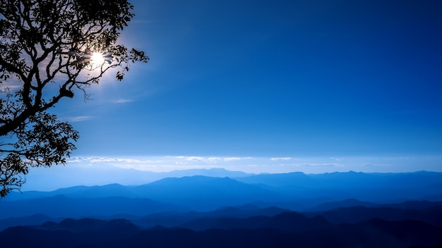 Arbre de silhouettes au sommet de la montagne au coucher du soleil