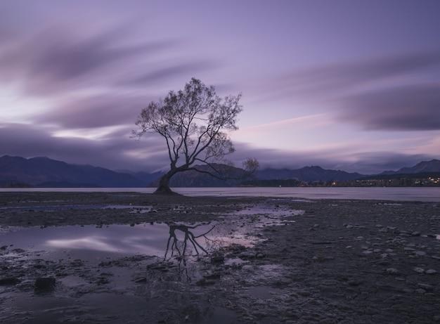 Arbre solitaire au bord du lac au coucher du soleil