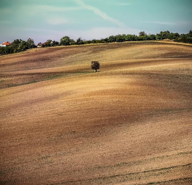 Arbre solitaire sur un champ labouré